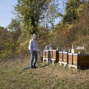 Bee happy Natur und Bienen glücklich machen